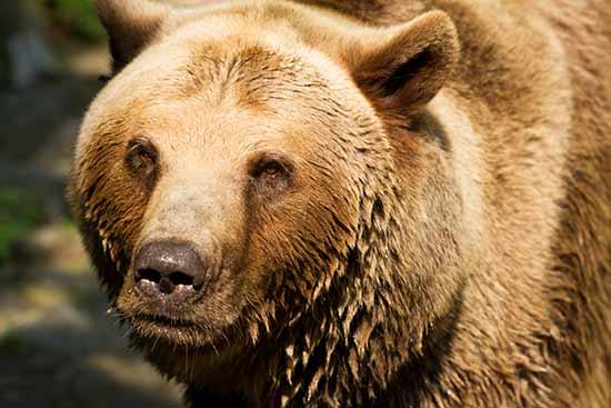 que-faire-en-slovaquie-zoo