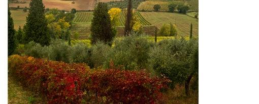 voyage-famille-enfant-bébé-Chianti-Toscane-Italie-guide-conseil-blog-vacances