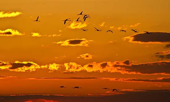 camargue-en-famille-oiseaux