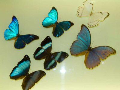 papillon-musée-de-grenoble