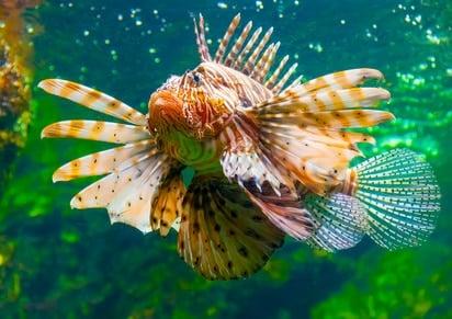 barcelone avec enfants aquarium