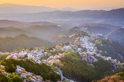 Yoshinoyama, Japon cerisier