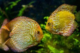 poisson-aquarium-barcelone