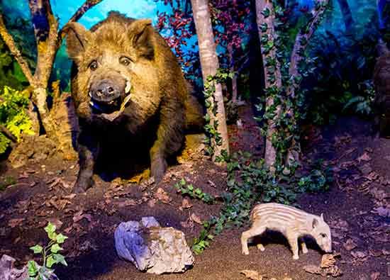 musee histoire naturelle geneve