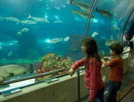 enfants à Aquarium-barcelone