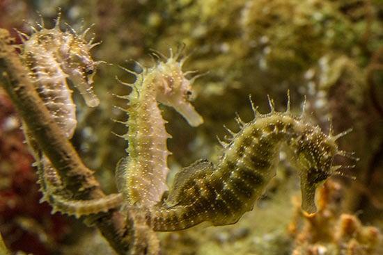 visite aquarium barcelone