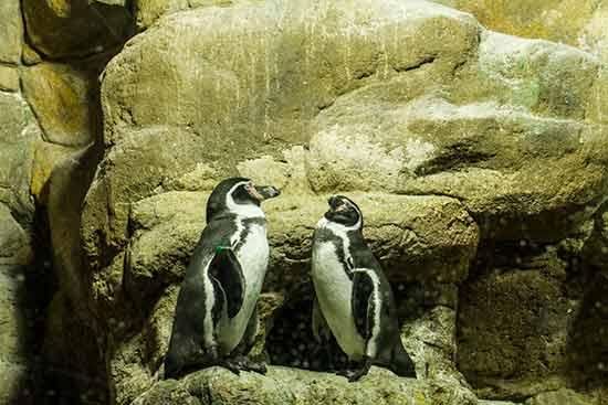 aquarium de barcelone avis