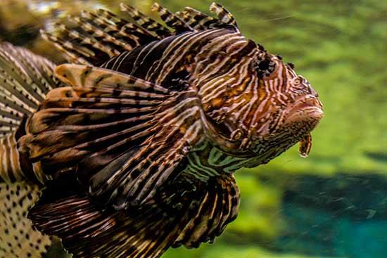 visite aquarium de barcelone