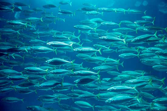 banc-de-poissons-oceanorium-lisbonne
