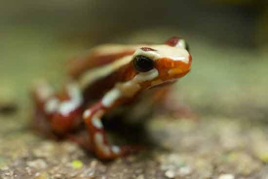 grenouille-oceanorium-lisbonne