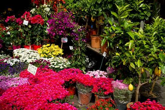 marché-aux-fleurs-nice