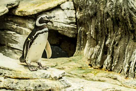 lisbonne avec enfants en famille pingouin-de-magellan-oceanorium