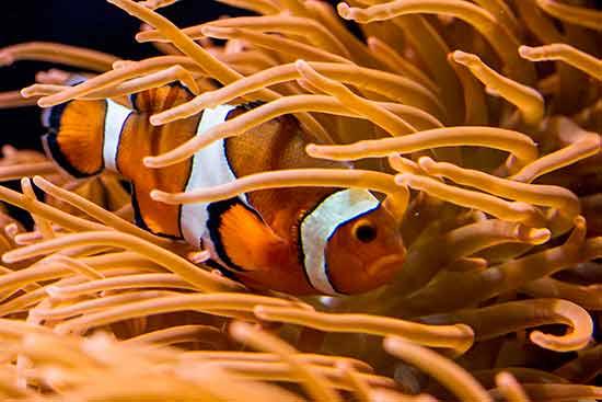 lisbonne avec enfants en famille poisson-clown-oceanorium