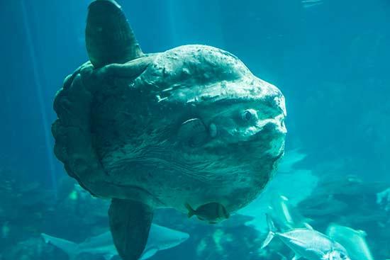 lisbonne avec enfants en famille poisson-lune-oceanorium