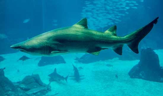 lisbonne avec enfants en famille requin-oceanorium