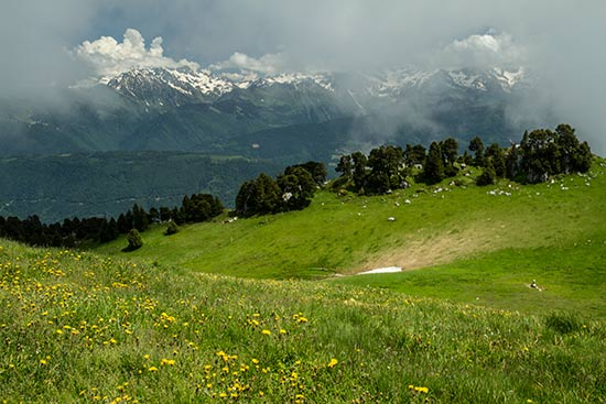 belledonne-vu-de-chartreuse-dans-alpes