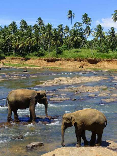 paysage-sri-lanka-elephant dans rivière