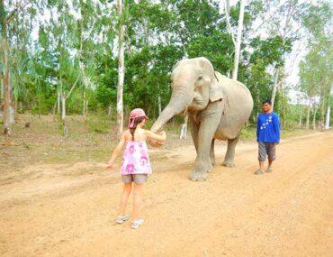 enfant-avec-elephant-thailande soin