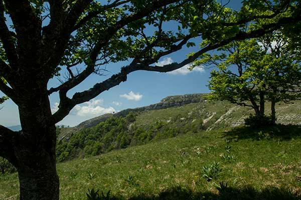 arbres-jura