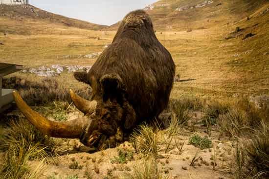 grotte chauvet rhinocéros ardeche