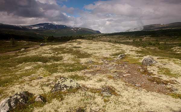 randonnée-norvege-parc-dovrefjell