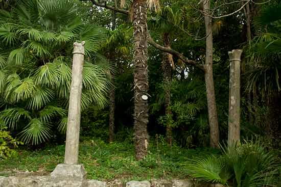 Croatie-en-famille-arboretum-Trsteno