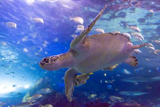 visite-toronto-en-famille-aquarium