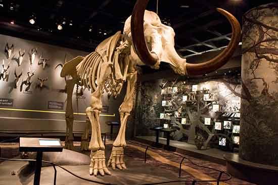 stockholm-avec-enfants-museum-histoire-naturelle