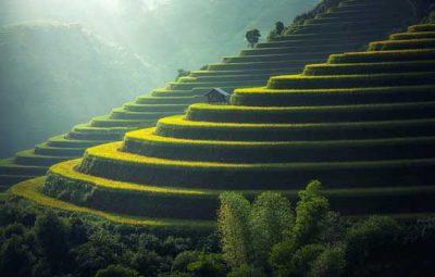 visiter-la-thailande-en-famille-rizières