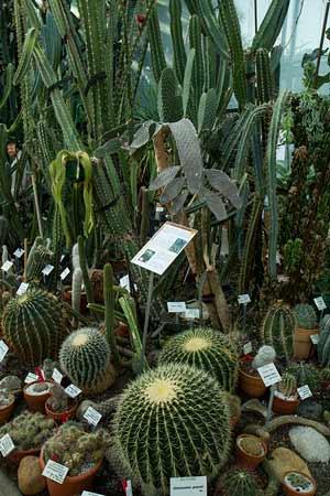 jardin-du-museum-toulouse