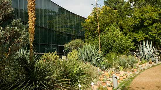 jardins-du-museum-toulouse