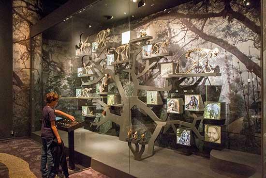 natural-history-museum-stockholm-avec-enfant