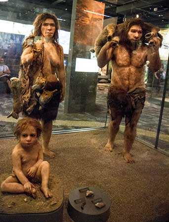 natural-history-museum-stockholm-en-suède