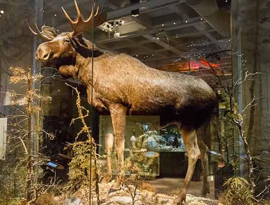 natural-history-museum-stockholm-suède