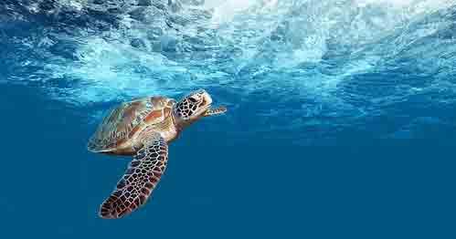 voyage-en-famille-yucatan-blog-tortue