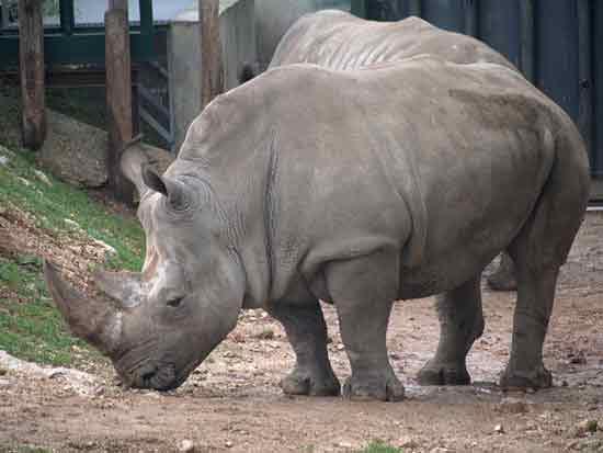 activité-famille-montpellier-zoo