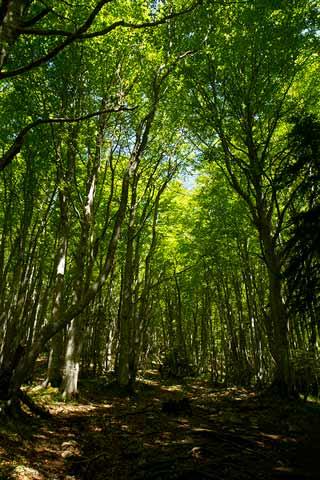 randonnée-en-famille-refuge-des-bannettes-chartreuse