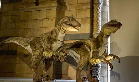 voyage-à-londres-en-famille-museum-histoire-naturelle