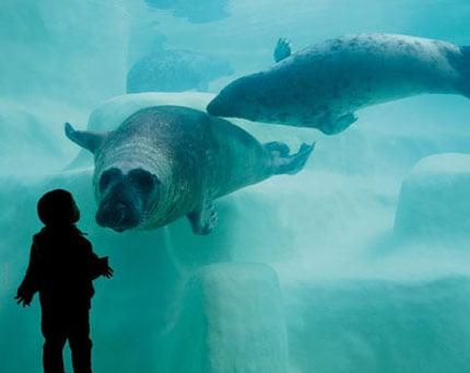 biarritz-avec-enfant-aquarium
