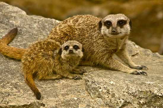 visite-ardeche-en-famille-zoo