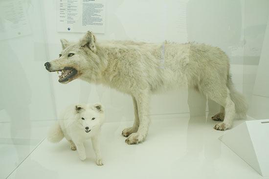 musee-du-monde-polaire