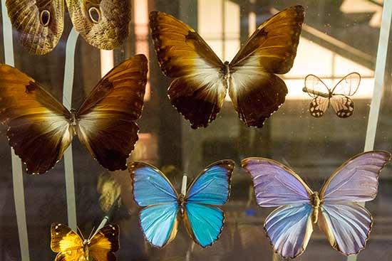 musee-de-la-grande-evolution