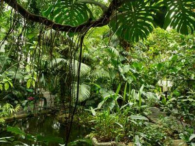 serres-tropicales-jardin-des-plantes