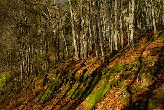 plateau-de-la-moliere-rando-famille-vercors