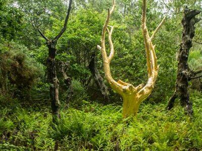 randonnée-brocéliande-val-sans-retour